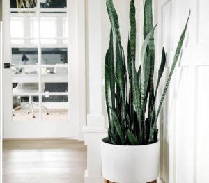 Những loại cây lọc không khí trong nhà